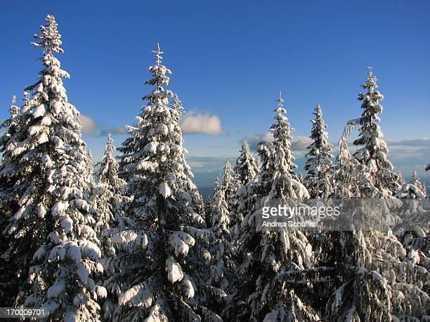 winter, grouse mountain - montanhas north shore imagens e fotografias de stock