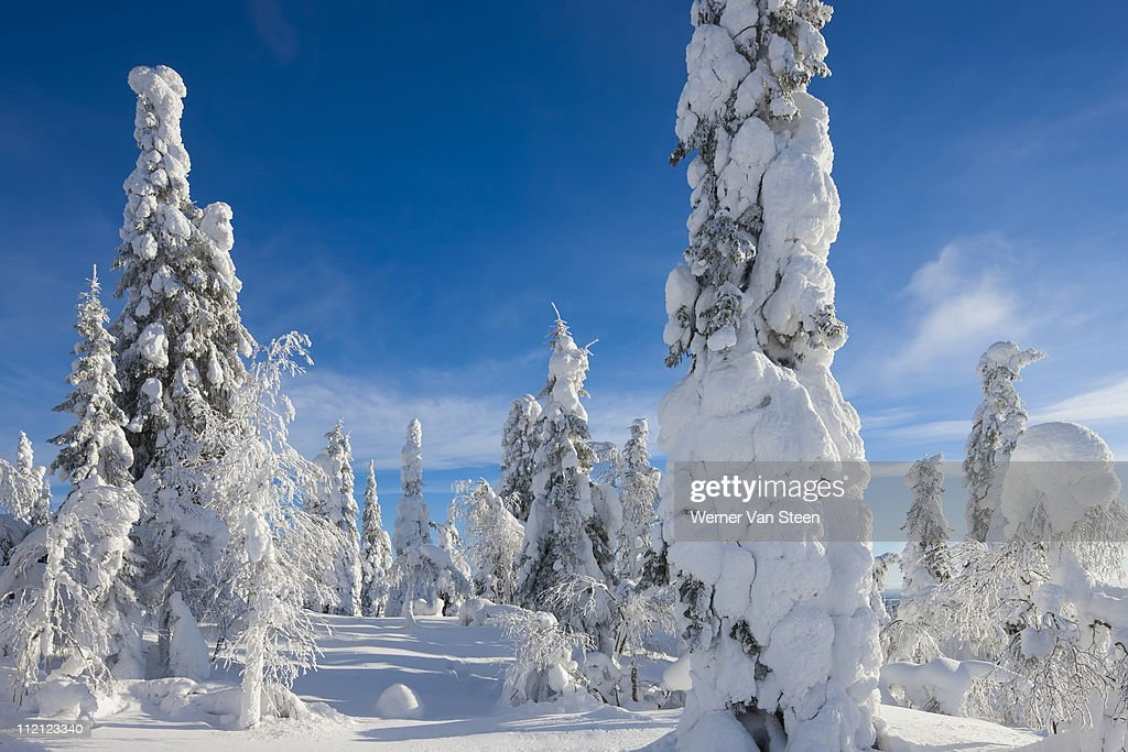 Winter heaven : Stock Photo