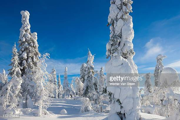 winter heaven - nature stockfoto's en -beelden