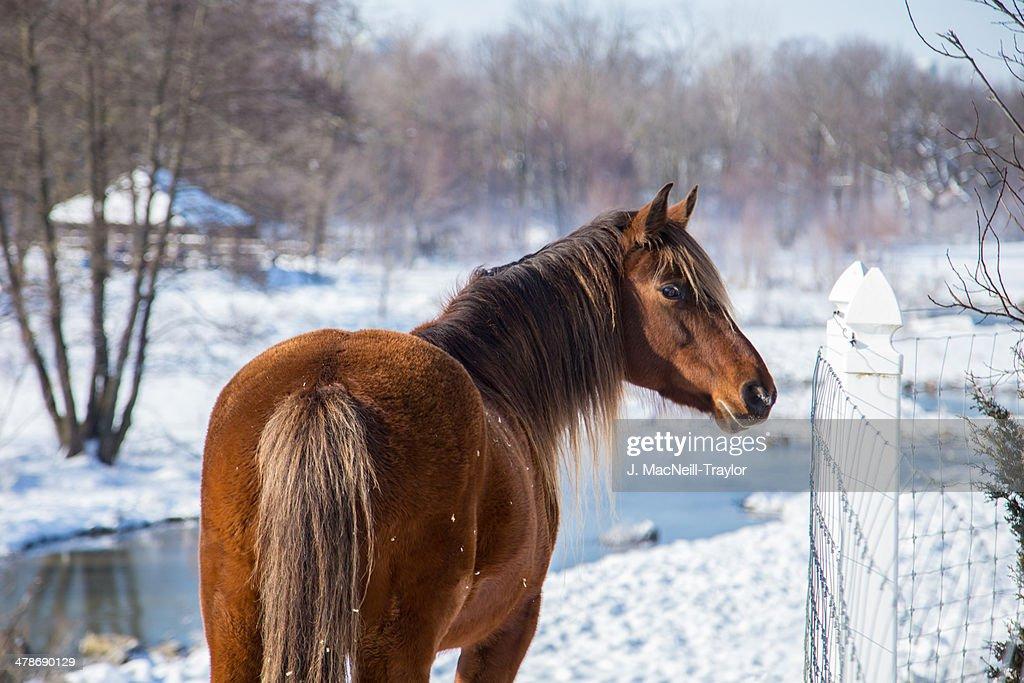 winter horse : Stock Photo