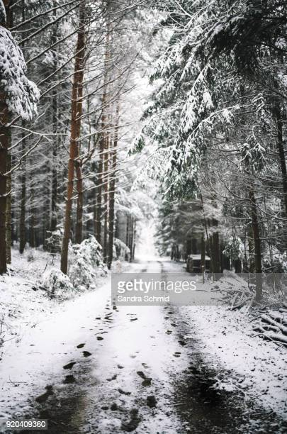 winter im wald - wald stock pictures, royalty-free photos & images