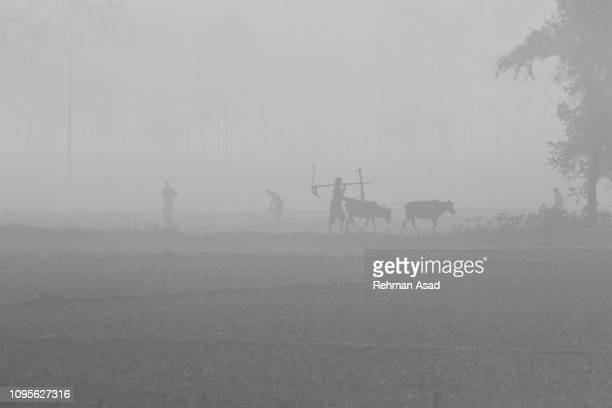 winter in bangladesh - sustainable development goals stock pictures, royalty-free photos & images