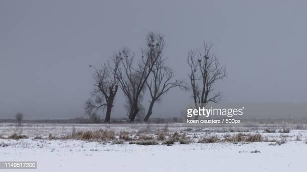 winter in bourgoyen - 東フランダース ストックフォトと画像
