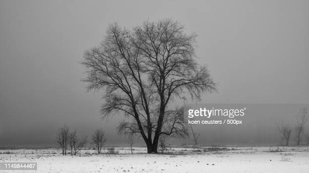 winter in bourgoyen (bw version) - 東フランダース ストックフォトと画像