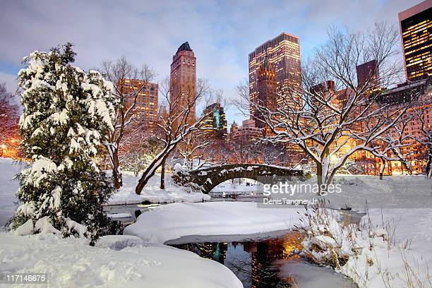 winter in central park, new york city - central park stock pictures, royalty-free photos & images