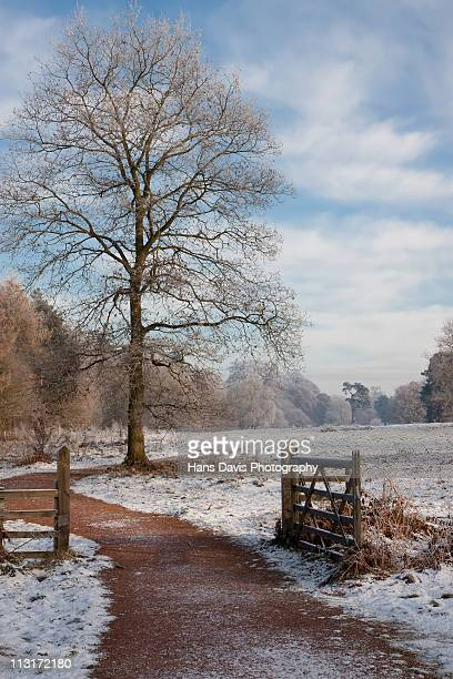 winter in clumber park - south yorkshire stock pictures, royalty-free photos & images