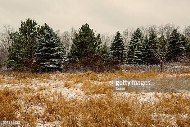 Winter in MN