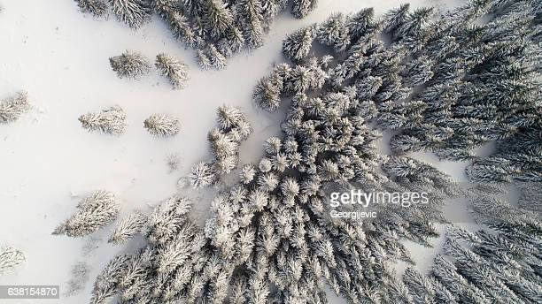 winter in mountain - treetop stock photos and pictures