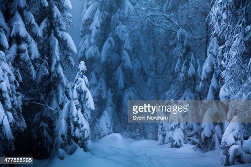 Winter in Norwegian wood