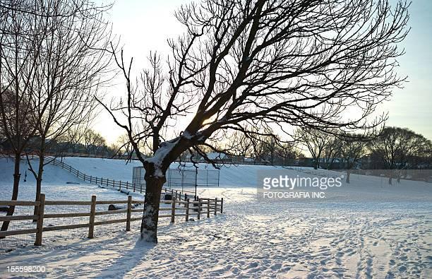 オンタリオの冬