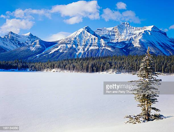 winter in the canadian rockies - banff national park stock pictures, royalty-free photos & images