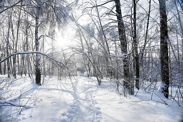 Winter In The Forest. Wall Art