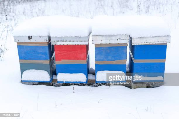 winter in the village with beautiful colorful bees houses - jasmin sturm stock-fotos und bilder