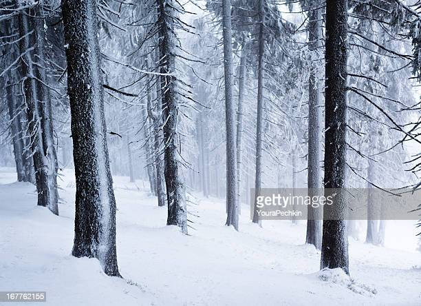 Winter in Holz