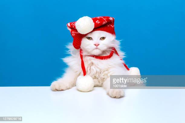 winter is coming and i'm ready for winter with red stocking hat - christmas kittens stock pictures, royalty-free photos & images