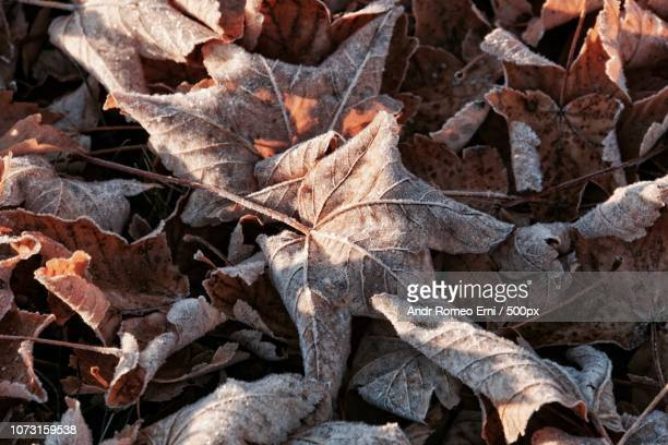 winter is coming soon - coming soon stock pictures, royalty-free photos & images