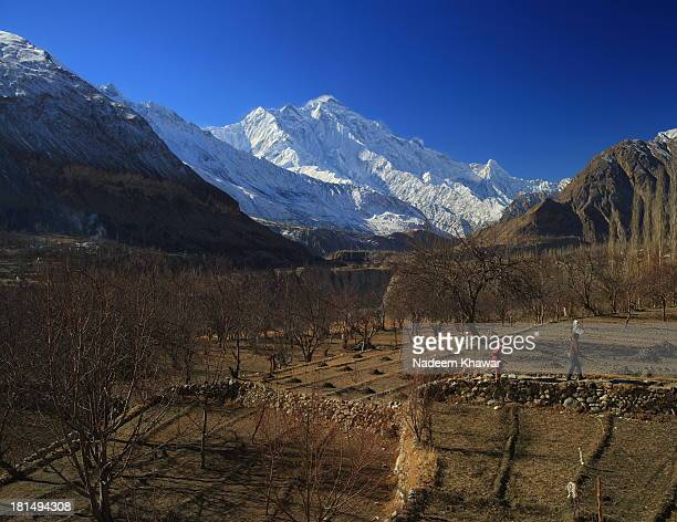 Winter is near to end and Apricot trees are just waiting to blossom in Hunza valley's Gardens in front of Mighty Rakaposhi. Rakaposhi, 7788 meter...