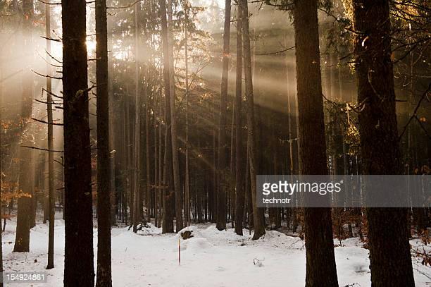 Paisaje de invierno y hermoso sunbeams