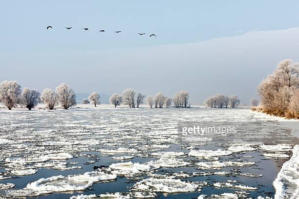Winter landscape at Elbe River.