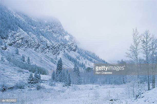 Winter Landscape in Aspen, Colorado