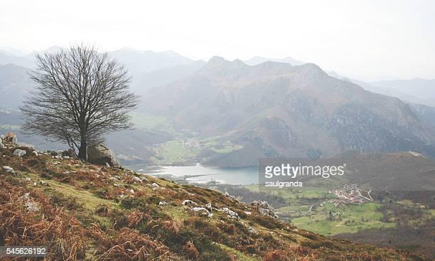winter landscape in asturias - principado de asturias fotografías e imágenes de stock