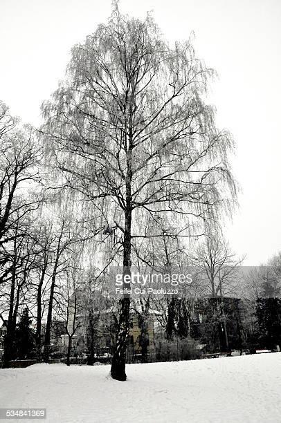 Winter landscape in Biel, Switzerland