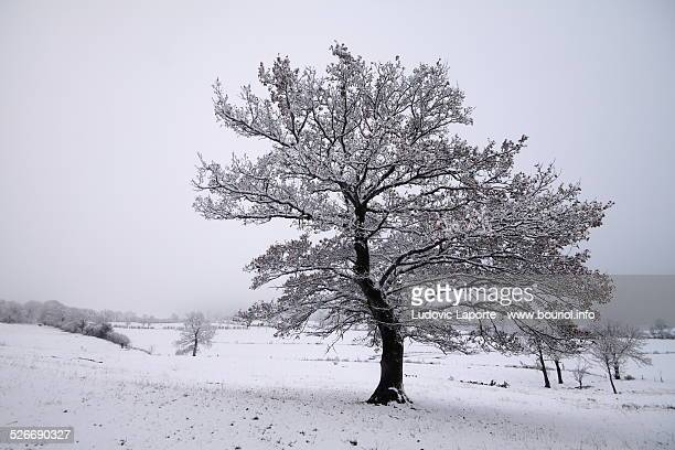 winter landscape in cantal - cantal stock pictures, royalty-free photos & images