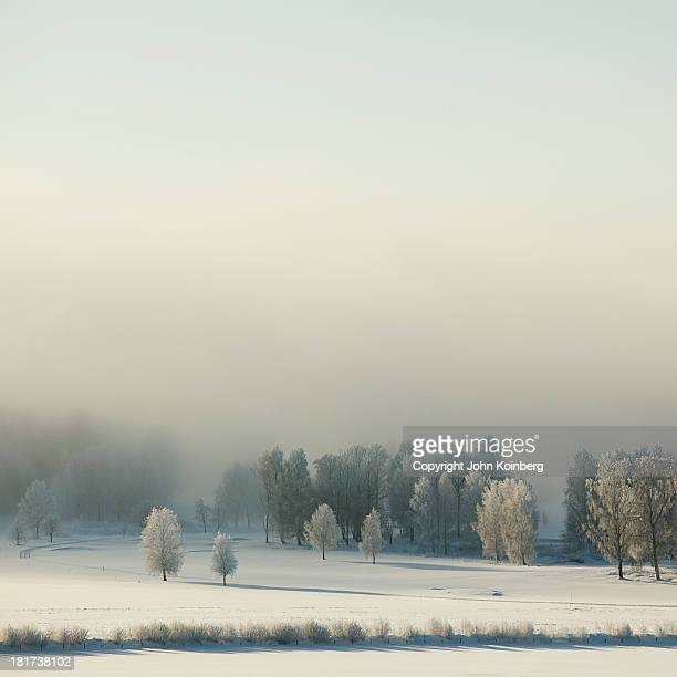 Winter landscape in fog