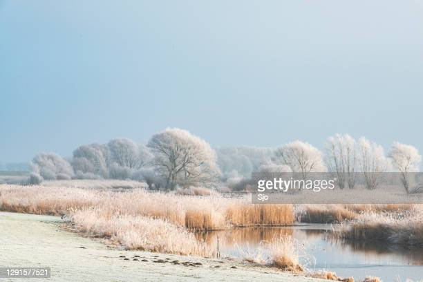 "winter landscape in the delta of the river ijssel near kampen, the netherlands. - ""sjoerd van der wal"" or ""sjo"" stock pictures, royalty-free photos & images"