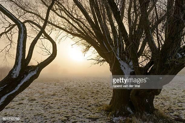 "winter landscape in the river ijssel floodplains - ""sjoerd van der wal"" stock pictures, royalty-free photos & images"