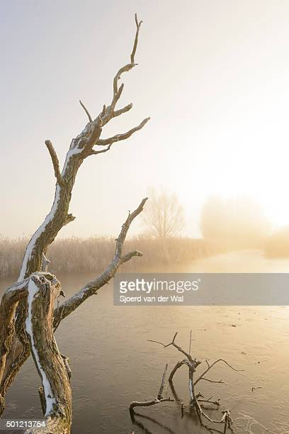 "winter landscape in the river ijssel floodplains - ""sjoerd van der wal"" photos et images de collection"