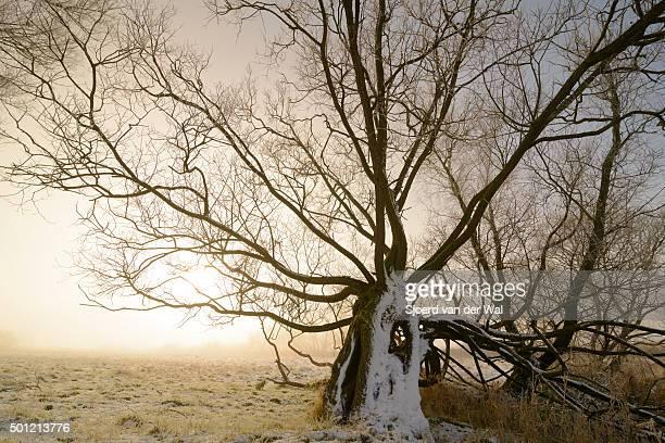 "winter landscape in the river ijssel floodplains - ""sjoerd van der wal"" or ""sjo"" stock pictures, royalty-free photos & images"