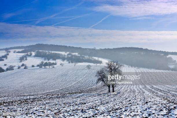 winter landscape near knezdub, bile karpaty, white carpathian mountains protected landscape area, southern moravia, czech republic - east stock pictures, royalty-free photos & images