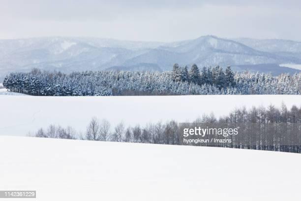 winter landscape of biei, hokkaido, japan - biei town stock pictures, royalty-free photos & images