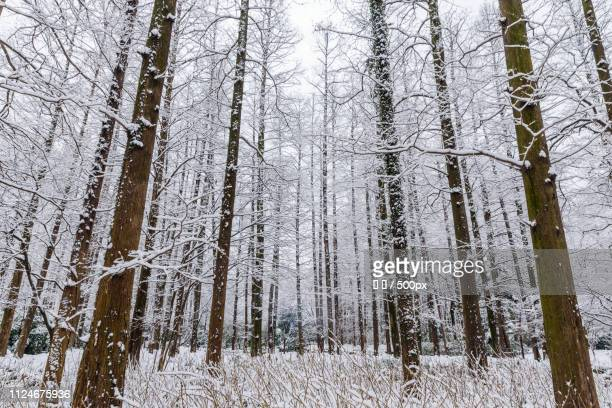 Winter landscape of forest with leafless trees