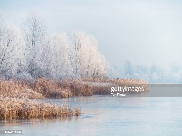 winter landscape of the frozen pond and rime ice on the trees - ukraine landscape stock pictures, royalty-free photos & images