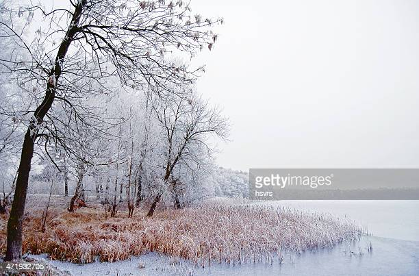 Winter landscape on a river with birch tree
