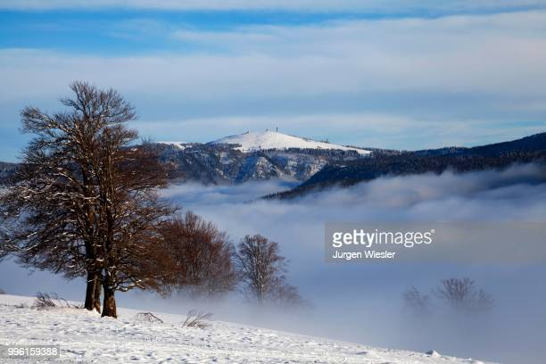 winter landscape on the feldberg mountain, atmospheric inversion, black forest, baden-wuerttemberg, germany - inversion_(meteorology) stock pictures, royalty-free photos & images