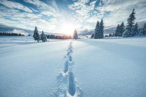Winter Landscape 1049223924