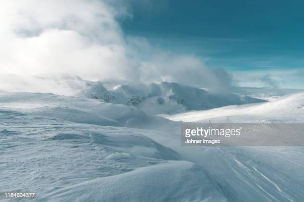 winter landscape - polar stock pictures, royalty-free photos & images