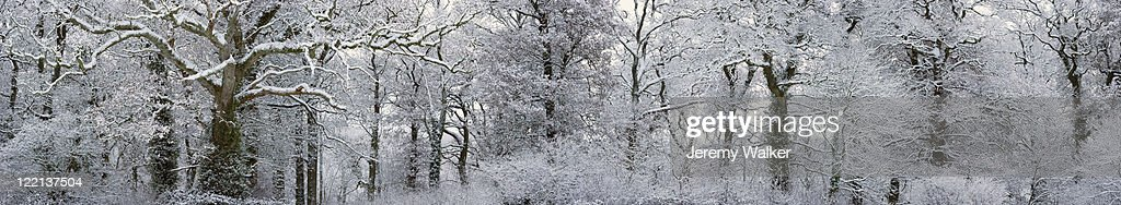 Winter Landscape : Bildbanksbilder