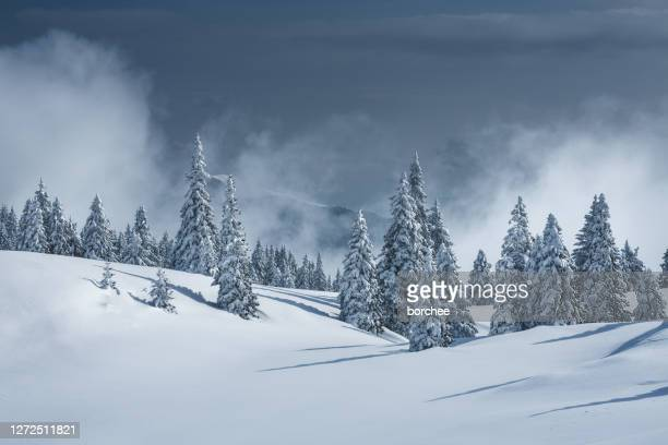 winter landscape - atmosphere stock pictures, royalty-free photos & images