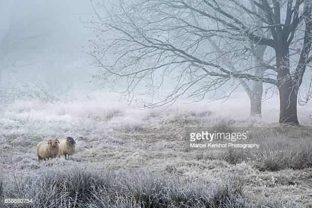 winter landscape - groningen provincie stockfoto's en -beelden