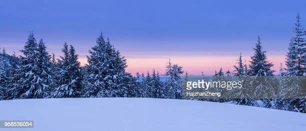 winter landscape - coniferous tree stock pictures, royalty-free photos & images