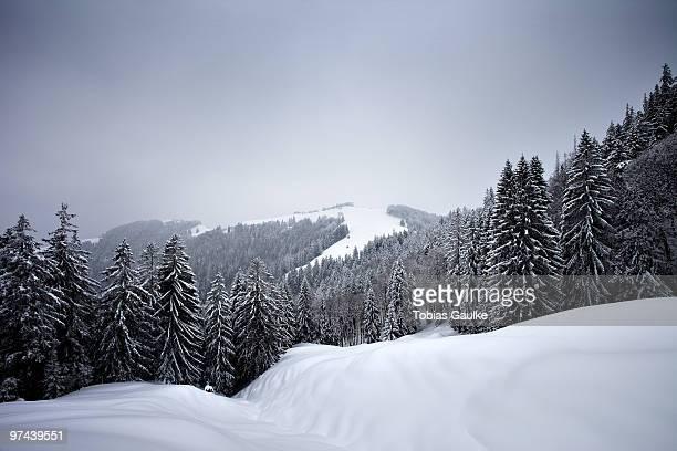 winter landscape.  - tobias gaulke stock-fotos und bilder