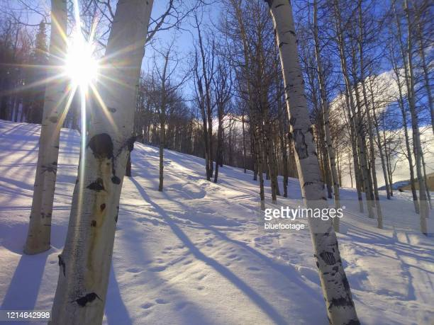winter landscape, snow and aspen trees - bluefootage stock pictures, royalty-free photos & images