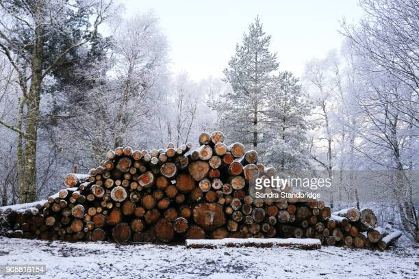 A winter landscape view of a pile of pine logs in Perthshire, Scotland, UK.