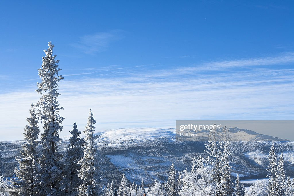 Winter landscape with forest : Stock Photo