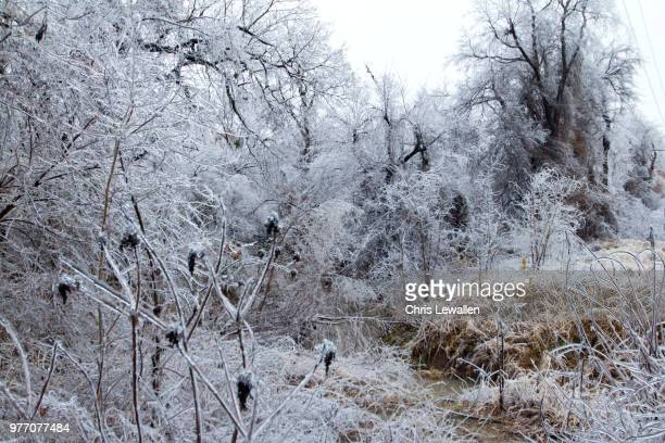 winter landscape with frozen plants, broken arrow, oklahoma state, usa - broken arrow oklahoma stock photos and pictures