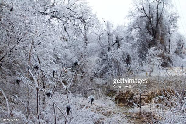 winter landscape with frozen plants, broken arrow, oklahoma state, usa - broken arrow oklahoma - fotografias e filmes do acervo